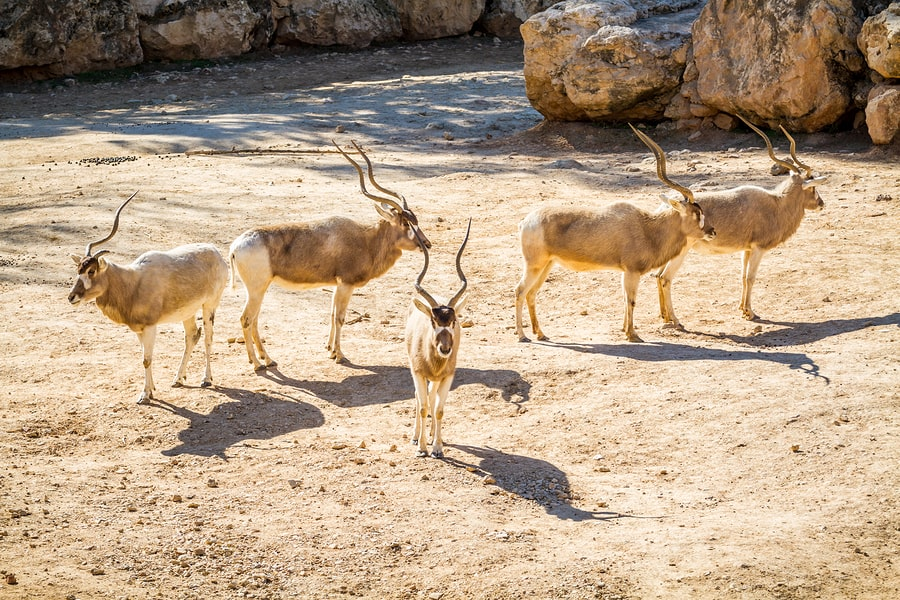 Jerusalem's biblical zoo